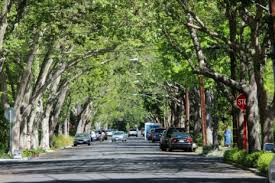 Palo Alto Neighborhood